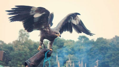 Eagle in hand